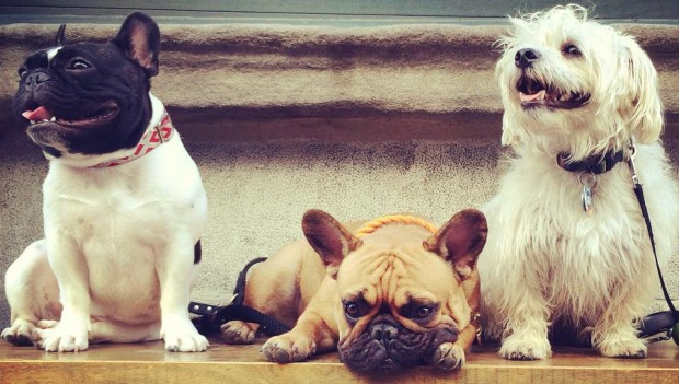 trois chiens en promenade - three dogs out for a walk
